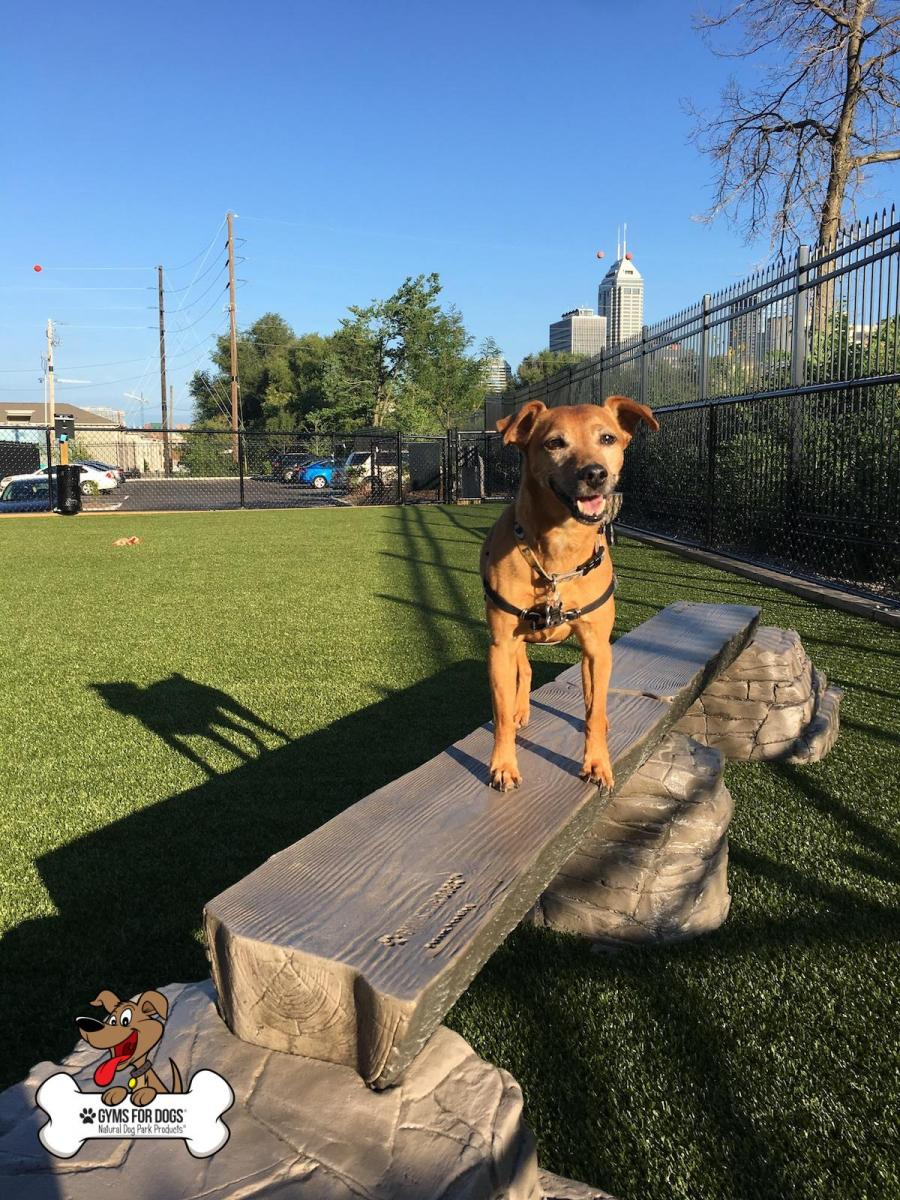 Dog-Park-Outfitters-Gyms-For-Dogs-Dog-Balance-Beam-Ellies-Jump-Balance-Beam-2