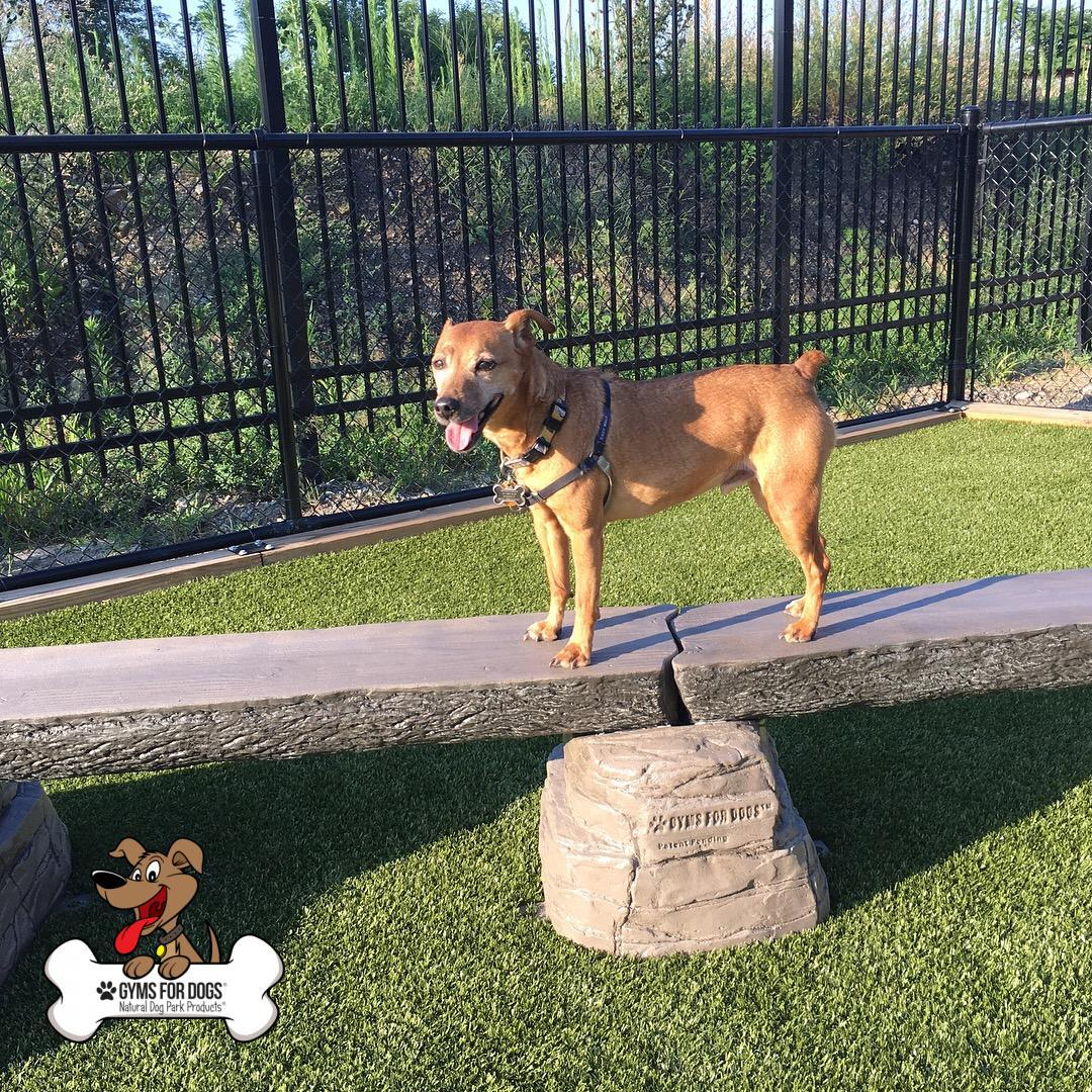 Dog-Park-Outfitters-Gyms-For-Dogs-Dog-Balance-Beam-Ellies-Jump-Balance-Beam-3