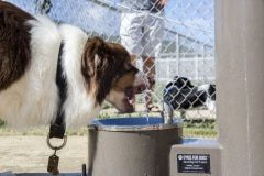 Water-Fountain-Military-Base-Gyms-For-Dogs
