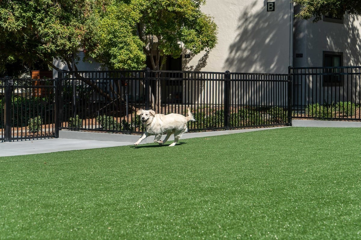 Gyms-For-Dogs-Doggie-DVR-Fence-